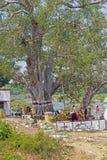 Hindu shrines under the tree Royalty Free Stock Photos