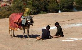 hinduiska pojkar spelar med Gangireddu eller den dekorerade tjuren Royaltyfri Bild