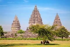 hinduiskt prambanan tempel royaltyfri foto