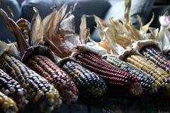 hindusi kukurydzę ii Obraz Royalty Free