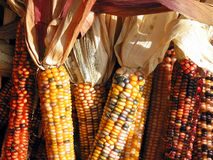 hindusi kukurydziany Fotografia Royalty Free