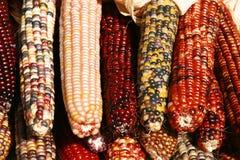 hindusi kukurydziany Zdjęcia Royalty Free