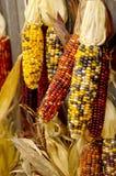 hindusi kukurydziany Zdjęcia Stock