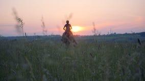 Hingsten är snabbt växande över fältet med en kvinnlig ryttare arkivfilmer