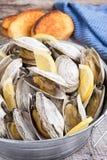 Hink av ångade musslor Fotografering för Bildbyråer