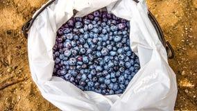 Hink av blåbär Arkivfoton