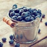 Hink av blåbäret Fotografering för Bildbyråer