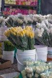 Hink av slågna in gula tulpan som omges av vita tulpan, Bogo Fotografering för Bildbyråer