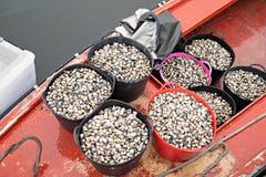 Hinkar med nya musslor på fiskebåten som är klar att gå till fiskmarknaden arkivfoto