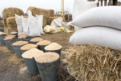 Hinkar och påsar av korn, baler av hö och sugrör Bymarknad av bönder Korn havre, vete, råg, frö, kaka, hirs, sorgh Royaltyfri Fotografi