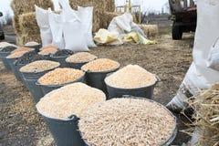 Hinkar och påsar av korn, baler av hö och sugrör Bymarknad av bönder Korn havre, vete, råg, frö, kaka, hirs, sorgh Arkivbilder