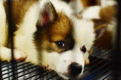 Hinlegender und wartender Hund stockbilder