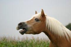Hinnikend paard royalty-vrije stock fotografie