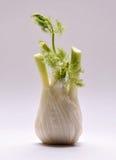 Hinojo orgánico con las hojas en un fondo blanco Foto de archivo