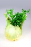 Hinojo vegetal verde Imágenes de archivo libres de regalías