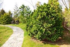 Hinoki cypress Stock Photos
