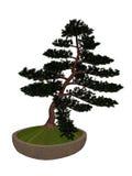 Hinoki false cypress tree bonsai - 3D render Royalty Free Stock Photo