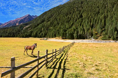 Hinter dem Zaun steht ein rustikales Pferd Lizenzfreie Stockfotos