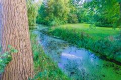 Hinter einem Baum, der auf dem Fluss groß nach Hintergrund sucht Lizenzfreie Stockfotografie