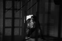 Hinter Gittern eingeschlossen Stockfotos