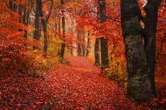 Hinterabflussrinne ein Herbstwald mit Nebel Lizenzfreie Stockbilder