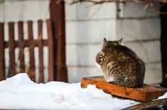 hintere Ansicht der Katze im Schnee lizenzfreie stockfotos