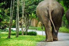 Hintere Ansicht des thailändischen Elefanten Stockfotografie