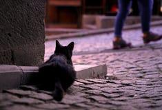 Hintere Ansicht einer aufpassenden Straße der schwarzen Katze hinter der Wand Stockfoto