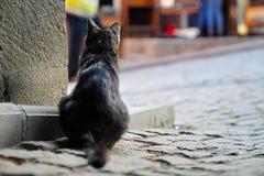 Hintere Ansicht einer aufpassenden Straße der schwarzen Katze hinter der Wand Stockbilder