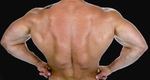 Hintere Ansicht eines Bodybuilders lizenzfreies stockbild