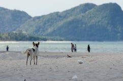 Hintere Ansicht eines Hundes allein auf dem glatten nassen Strandsand, der heraus zum Meer und zu den Leuten schaut Stockfotos