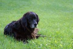 Hintere Ansicht eines Welpenhundes auf einem grauen Hintergrund Stockbild