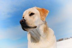 Hintere Ansicht eines Welpenhundes auf einem grauen Hintergrund Lizenzfreie Stockbilder