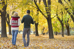 Hintere Ansicht von den jungen Paaren, die in Park während des Herbstes gehen Stockfoto