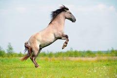 Hinteres freies Pferd auf dem Gebiet Stockbild