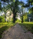 Hinterführende Abflussrinne der Wald Stockbilder