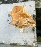 Hintergasse-Katze lizenzfreie stockbilder