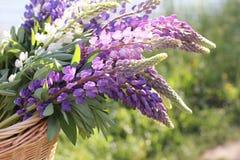 Hintergründe -- Blumen in einem Korb Lizenzfreies Stockbild