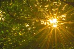 Hintergründe: Sonneleuchte lizenzfreie stockbilder