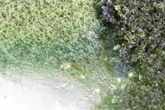 Hintergründe von Kolonien-Eigenschaften des Pilzes und der Algen lizenzfreies stockfoto