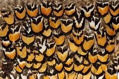 Hintergründe von Vogelfedern Abbildung kann als Hintergrund benutzt werden Lizenzfreie Stockfotografie