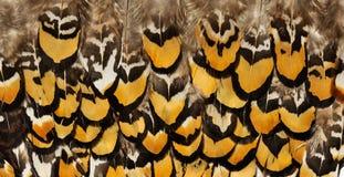 Hintergründe von Vogelfedern Abbildung kann als Hintergrund benutzt werden Stockbild