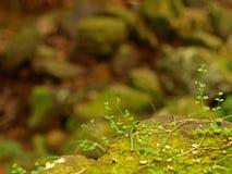 Hintergrund-Abbildung der Natur Stockbild