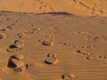 Hintergrund-Abbildung der Wüste Stockfotos