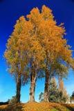 Hintergrund-Abbildung des Baums im Herbst Lizenzfreie Stockbilder