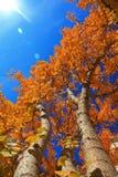 Hintergrund-Abbildung des Baums im Herbst Lizenzfreie Stockfotos
