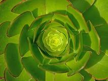 Hintergrund-Abbildung von Houseleek u. von grünem Blumenblatt Stockbilder
