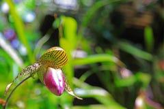 Hintergrund-Abbildung von Nepenthe Stockfotografie