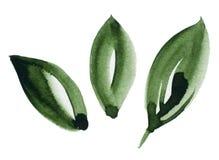 Hintergrund-Acrylfarbenabgehobener betrag des Wasserfallfarbbeschaffenheitsgrünblattes weißer lokalisierter vektor abbildung