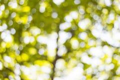 Hintergrund Bokeh von der Sonne unter dem Schatten von Bäumen Lizenzfreie Stockbilder